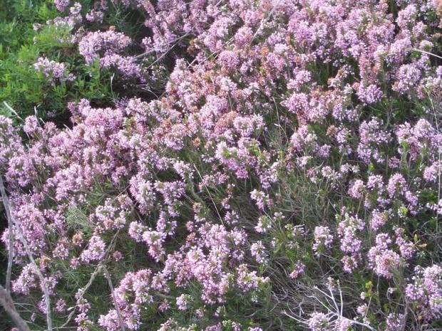Diversitat de flora i fauna