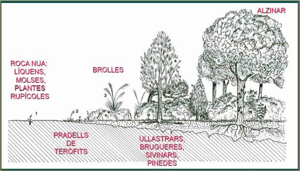 caracteristiques vegetals