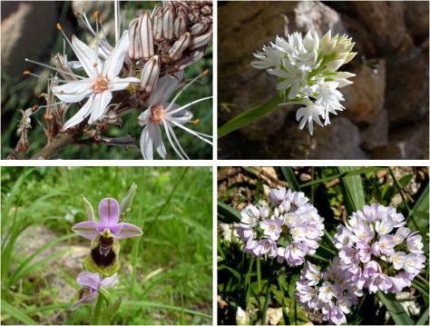 grup floral